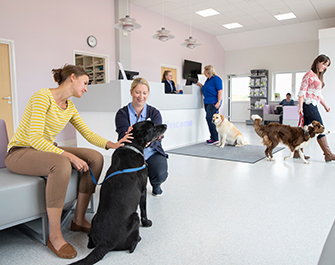 pet dog owners vet surgery waiting reception room floors